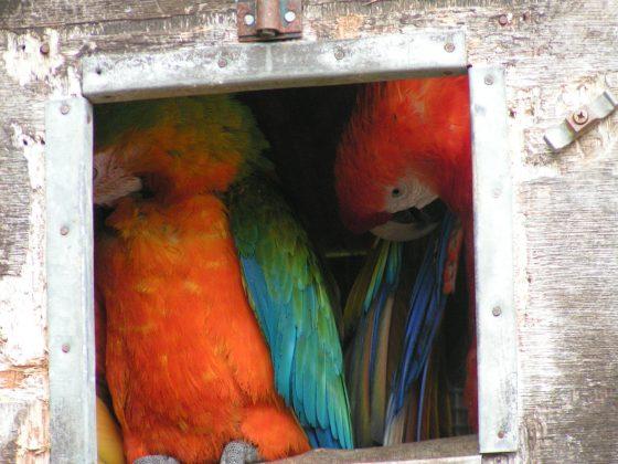 Parrots framed