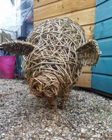 pic of willow pig from the front
